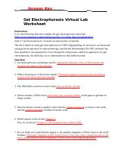 Gel Electrophoresis Virtual lab wksht classzone KEY.docx ...