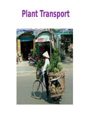 Lecture 7 - Plant transport1.pptx