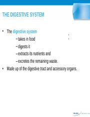 1Digestive System Lesson -Original.pptx