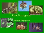 Lec#9-AsexualPropagation