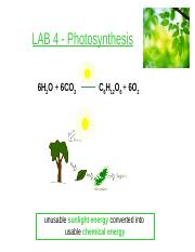 LAB 4 - Photosynthesis(1)-2