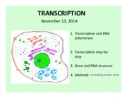 11-13-2014 Gene Expression I (Transcription and RNA processing)