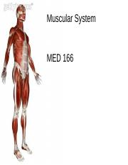 Chapter 7 Muscle System resvivsed 2.10
