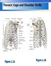 Lecture 4 - shoulder bones and joint.ppt