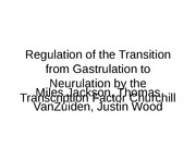 Regulation of the Transition from Gastrulation to Neurulation2