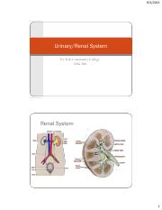 NRSG 200 renal urinary Student201520