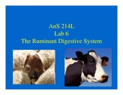 Ruminant Lecture
