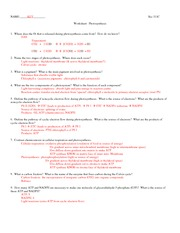 311C photosynthesis_Worksheet+A