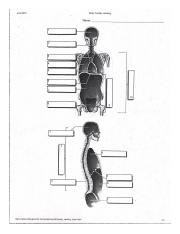 Body Cavities Labeling.pdf