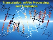 Transcription,+mRNA+Processing+_+Translation