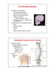 Lecture 2 - The Skeletal System