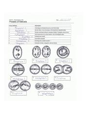 876BA1DB-B32A-45C3-B5E2-58E6EA5901FB.jpeg - Phases of ...