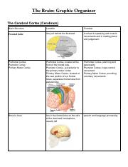 Copy of Jilsuri Hernandez Study Chart_ The Brain.pdf