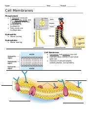 Membrane Structure_Osmosis_Notes.doc