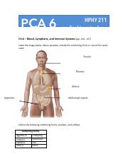 PCA 6 (Blood, Lymph, Immune Systems).pdf