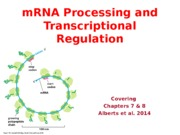 Lecture 5- mRNA Processing _ Transcriptional Regulation