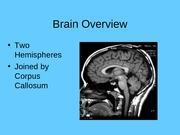 3_Brain_Overview