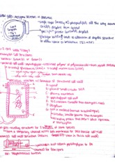 Intro to Physiology Class Notes  1