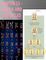 Chapter 13- Meiosis - First half - Life cycles.pptx
