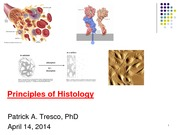 Principles of Histology