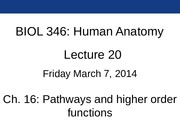 Lec20_Ch16_3-7-2014_neural_pathways_Blackboard