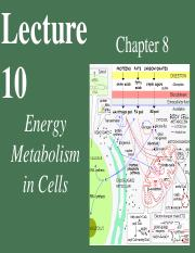 Chapter 8 - Energy, Enzymes, Metabolism