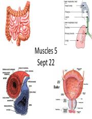 Muscles5-Sept22(s)