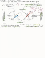 The Calvin Cycle vs. the Kreb's Cycle Quiz