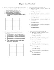 CPE Dihybrid Cross - Dihybrid Cross Worksheet 1 Set up a punnett ...