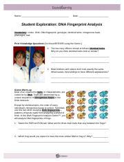 dnafingerprintse 1 name date student exploration dna fingerprint analysis vocabulary codon. Black Bedroom Furniture Sets. Home Design Ideas
