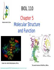 Chapter 5-biomolecules.ppt