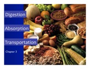 Topic 4- Digestion, Absorption & Transportation Slides