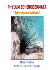 7-Echinoderms_LectureS