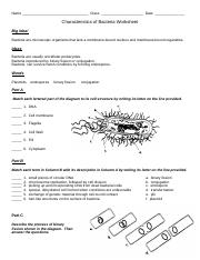 characteristics of bacteria worksheet.doc - Name Class Date ...