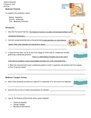 worksheet membrane potentials essay Membrane potentials in cells of all types, there is an electrical potential difference between the inside of the cell and the surrounding extracellular fluid this is termed the membrane potential of the cell.