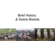 Swine_breeds_history_2012