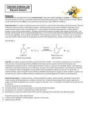 Catechol Oxidase Lab.docx