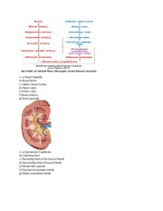 renal questions and diagrams