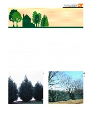 Evergreen Trees for Screens and Hedges in the Landscape