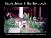 Saurischians 3- the theropods