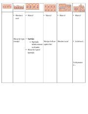 Cell Proliferation Types Worksheet.docx