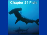 Chapter 24 Fishes 2012 updated