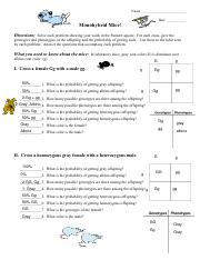 Monohybrid Mice - Monohybrid Mice Directions Work each ...