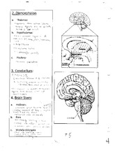 Diencephalon Notes