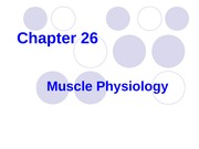 Muscle Physio-26