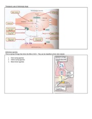Adrenergic_lectures_part_II