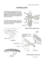 insect-structure-05