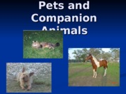 Pets_and_Companion_Animals_F_2011-3