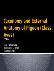 Taxonomy and External Anatomy of Pigeon.pptx