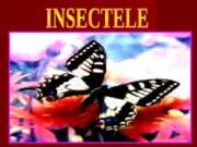 1_insecte